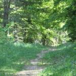 Comment préparer un premier trail?