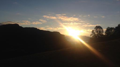 matinal tetras lyre