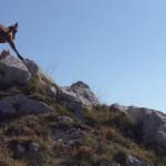 Le trail, un sport solitaire ?