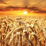 Nutrition trail : ce qui compte vraiment pour moi